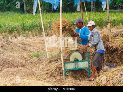 Mann arbeitet in einem Reisfeld in der Nähe der Stadt Yogyakarta. Java. Indonesien, Asien. - Stockfoto