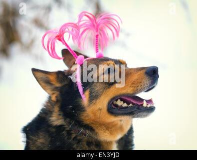 Hund, tragen Weihnachten Stirnband walking im freien - Stockfoto