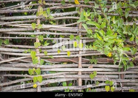 Groß Weiden Gewebter Drahtzaun Fotos - Elektrische ...