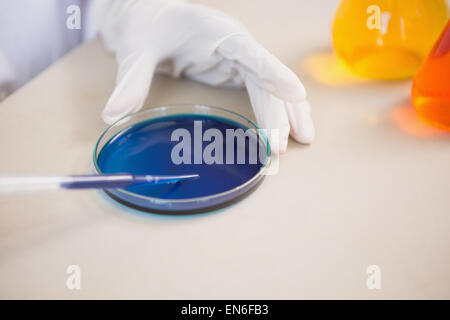 Wissenschaftler untersuchen Petrischale - Stockfoto