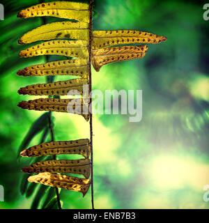 Zusammenfassung des trockenen Baum Zweig. - Stockfoto
