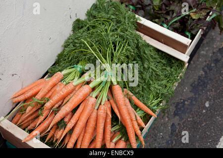 Kiste von frischen Bio Karotten auf Verkauf zu einem Street Food Markt - Stockfoto
