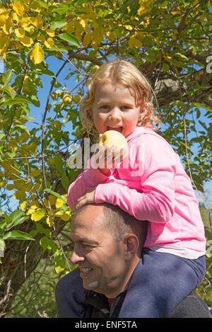 Mann mit kleinen Mädchen sitzen auf seinen Schultern einen Apfel essen, in einem amerikanischen Obstgarten - Stockfoto