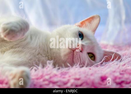 eine einzelne wei e katze mit anderen farbigen augen sitzt in einem weihnachtsbaum mit rosa und. Black Bedroom Furniture Sets. Home Design Ideas