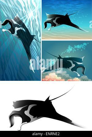 Satz von Manta Ray einschließlich vier Bilder - isolierte Manta Ray in schwarz und weiß und drei mantas - Stockfoto