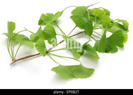 ginkgo biloba auf wei em hintergrund stockfoto bild 163118247 alamy. Black Bedroom Furniture Sets. Home Design Ideas