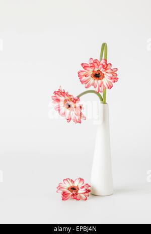 Zwei rote weiße Gerbera mit Verbeugung Stiele in Vase - Stockfoto
