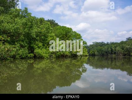 Panama, Darien Provinz Puerta Lara, Regenwald - Stockfoto