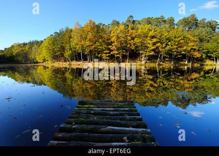 See mit farbigen Herbst Bäume und Holzsteg, Stuedenbach, Eppenbrunn, Pfaelzerwald, Rheinland-Pfalz, Deutschland - Stockfoto