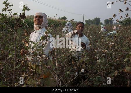 Warangal, Telangana, Indien. 27. März 2015. Swarupa Damasani funktioniert auf Baumwollfeldern, nachdem sich seine - Stockfoto