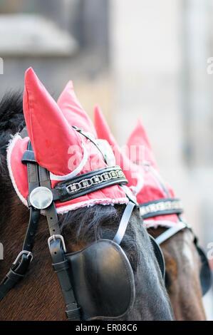 Ohr-Cover zieren die Pferde für den transport von Touristen in einem Fiaker rund um die Wiener Altstadt, Österreich. - Stockfoto