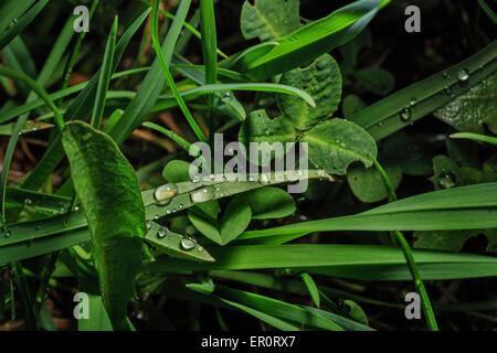Makro frischen grünen Gras mit Tropfen nach Regen. Das Konzept des Umweltschutzes. Grass-Hintergrund. - Stockfoto