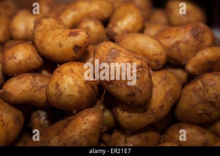 weiße Kartoffeln - Stockfoto