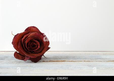Rote rose Blume auf die weißen Holzregal verdorrt. Weißen ...