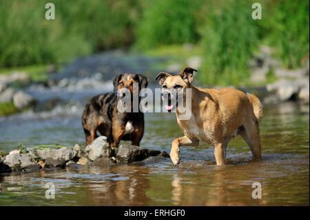 2 Hunde - Stockfoto