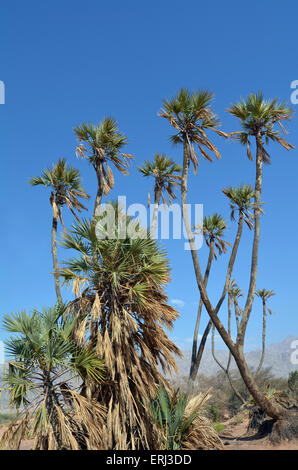 b ume in das jordantal bis heute der gerechte gedeiht wie die palme und wachsen wie eine zeder. Black Bedroom Furniture Sets. Home Design Ideas