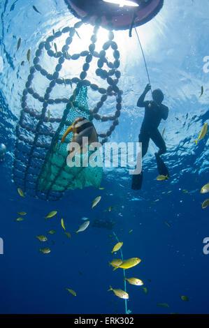 Fisch-Aggregation-Gerät mit Arbeiter, Süd Male Atoll, Malediven - Stockfoto