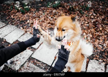 Bild von Hand retuschieren Eurasier Zucht im Park beschnitten - Stockfoto