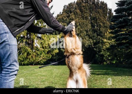 Junger Mann geben hohe fünf Eurasier im park - Stockfoto