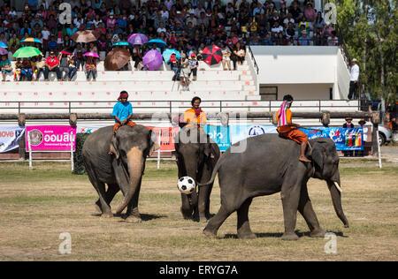 Elefanten, die Fußball spielen, Elephant Festival Surin Elephant Round-up, Surin Provinz, Isan, Isaan, Thailand - Stockfoto