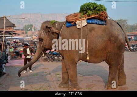 Indische Elefanten betteln Jodhpur Rajasthan Indien Asien - Stockfoto