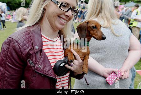 Brighton, UK. 14. Juni 2015. Dieser Hund wollte bei der jährlichen Rinde in der Park-Hundeausstellung durchgeführt - Stockfoto