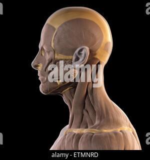 Konzeptbild im Stil von einem Tonmodell der Muskeln des Gesichts. - Stockfoto
