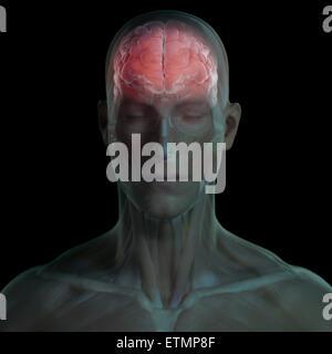 Konzeptbild des Gesichtes mit Muskeln und Gehirn sichtbar. - Stockfoto