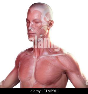 Konzeptbild des Gesichts und des oberen Körpers mit der Muskulatur unter der Haut sichtbar. - Stockfoto
