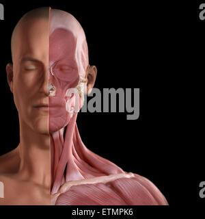 Konzeptbild des Gesichts mit den Muskeln auf der einen Seite ausgesetzt. - Stockfoto