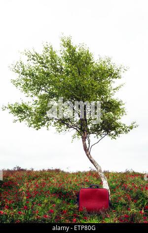 ein Baum auf einer Sommerwiese mit einem roten Koffer - Stockfoto