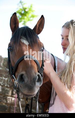 Eine junge Frau, die ein Pferd einen Zaum aufsetzen - Stockfoto