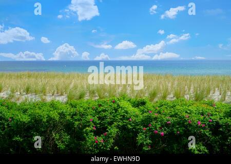 Blick auf den grünen Deich Rasen an der Ostseeküste - Stockfoto