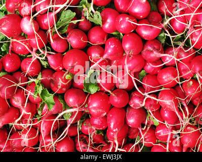 Roten Radieschen. Frische Produkte aus der heimischen Landwirtschaft auf dem Bauernmarkt. - Stockfoto