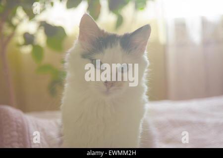 Katze auf dem Bett - Stockfoto