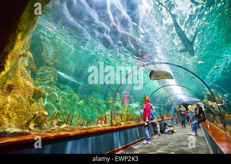 Aquarium im Loro Parque, Puerto De La Cruz, Teneriffa, Kanarische Inseln, Spanien - Stockfoto