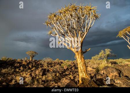 Keetmanshoop, Namibia - Köcherbaumwald auf dem Spielplatz der Riesen - Stockfoto