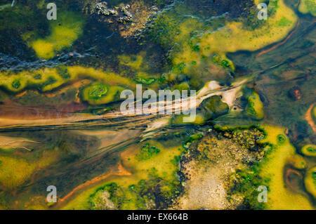 Algen und thermophilen Mikroorganismen in heißen Quellen in Upper Geyser Basin im Yellowstone Nationalpark, WY
