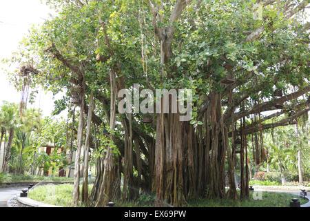 Nahaufnahme von altem Baumbestand - Stockfoto