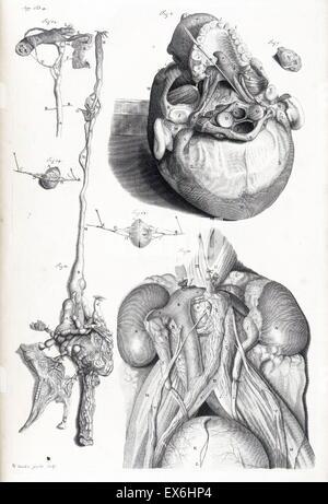 Illustration aus \