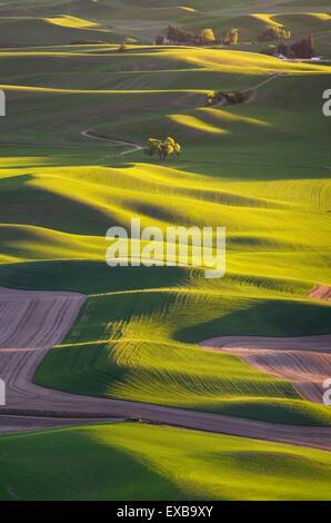 Sanften Hügeln der grüne Weizenfelder von Steptoe Butte, der Palouse Region Inland Empire of Washington gesehen - Stockfoto