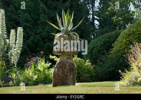 Aloe Vera-Feature-Pflanze im Garten Stockfoto