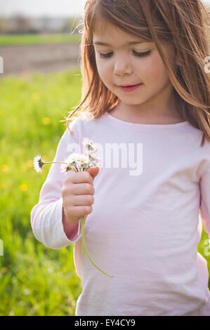 Lächelnde junge Mädchen im Feld Blick auf Gänseblümchen in ihren Händen - Stockfoto