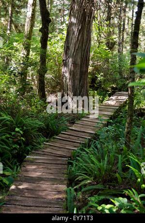 Holzsteg auf einem Pfad durch die Küsten gemäßigter Regenwald in der Nähe von Long Beach und Tofino, Britisch-Kolumbien, - Stockfoto