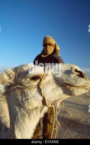 Berber Kamelreiter und Kamel während ein Kamel Trekking In der Wüste Sahara von Douz (Stadt am Rande der südlichen - Stockfoto