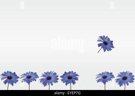 blaue Blumen isoliert in einer Reihe angeordnet - Stockfoto