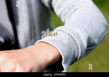 Heuschrecke auf Knaben arm - Stockfoto