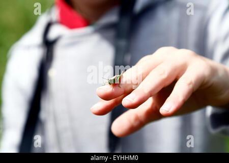 Heuschrecke auf den Finger eines kleinen Jungen - Stockfoto