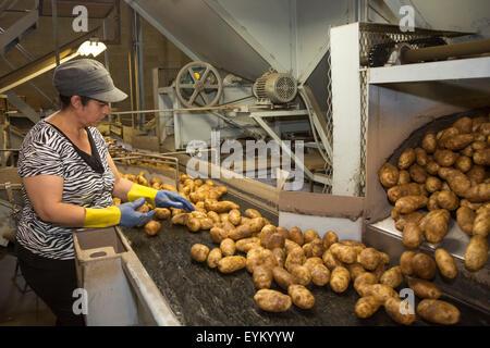 Shelley, Idaho - Mitarbeiter sortieren und Paket Idaho Kartoffeln bei der GPOD Verarbeitung zu Pflanzen. - Stockfoto