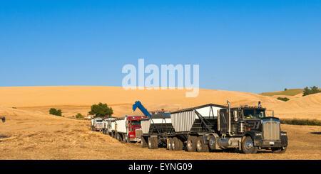 Getreidekipper aufgereiht warten darauf, vom Traktor gezogen Korn Karren in der Palouse Region Washington geladen - Stockfoto